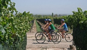 Visit top wineries in Mendoza on bike tour, an excellent way to get up close with the gorgeous landscape.
