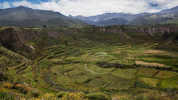 The pre-Inca terracing that lines Colca Canyon, Peru