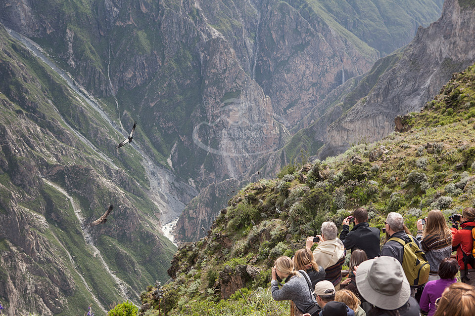 Visitors watching Andean condors in Colca Canyon, Peru