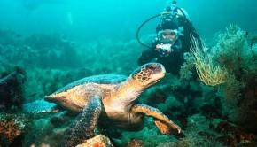 turtle diving web