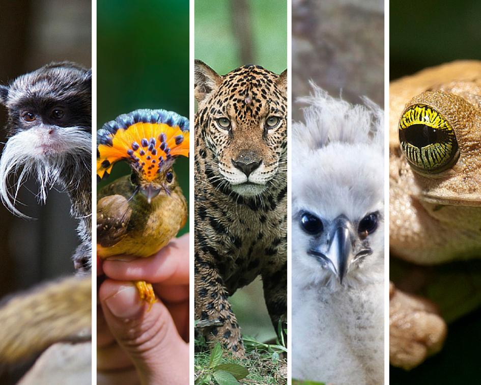 Amazon Rainforest Animals Collage