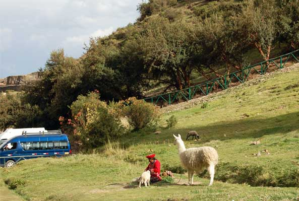 An indigenous woman with a llama and a couple sheep