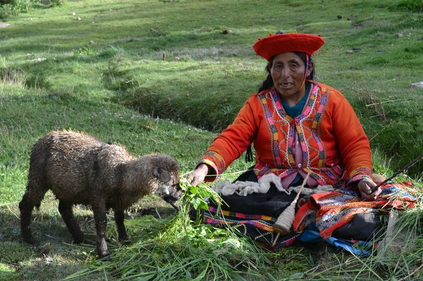 An indigenous woman feeds a sheep