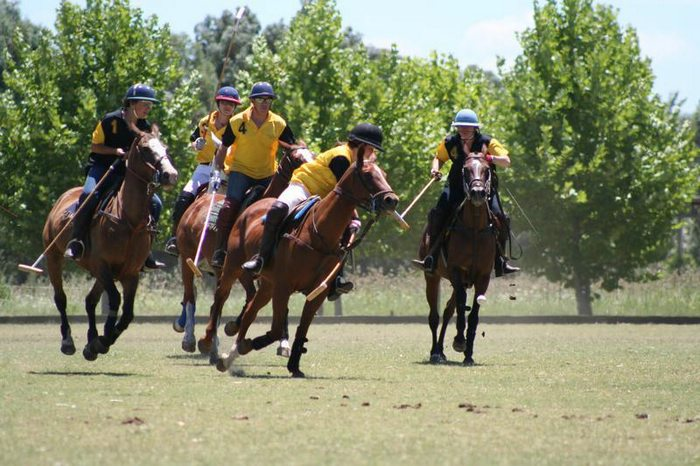 polo in Argentina, top sports in South America, Latin America For Less