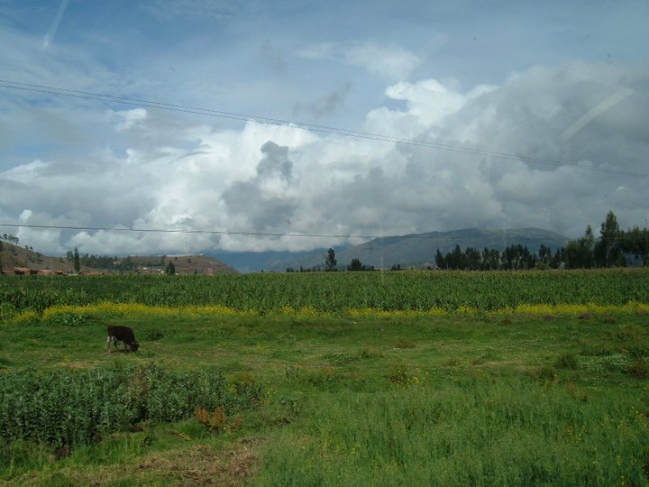 The lush green fields of the Sacred Valley.
