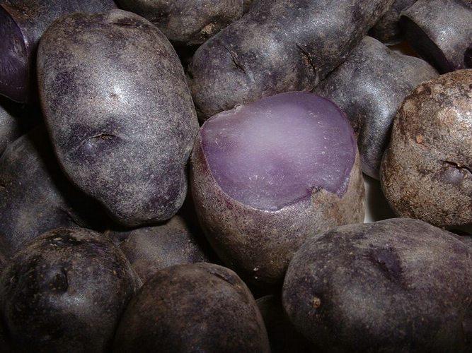 Purple Peruvian potatoes, Peru cuisine, Peru food, Peru For Less