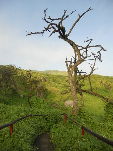 Lomas de Lachay trees, Lima