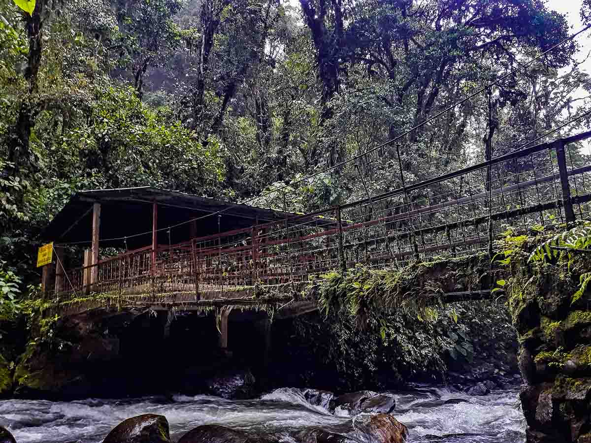 A wooden bridge crosses a creek in the Mindo cloudforest. Thick vegetation growing everywhere.
