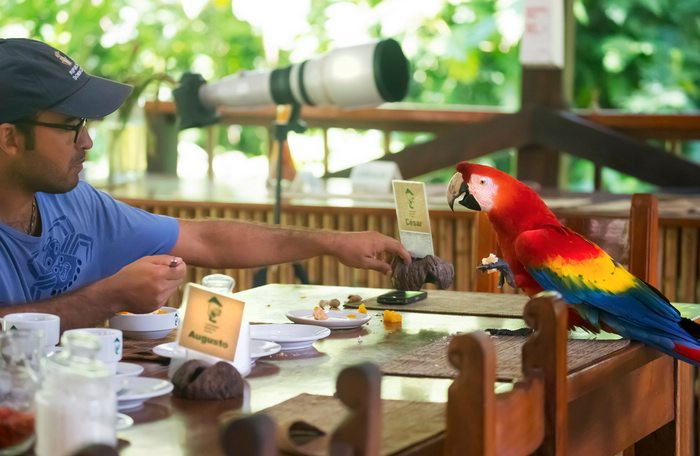 Visitor and local South American macaw discuss rainforest preservation at the Tambopata Research Center.