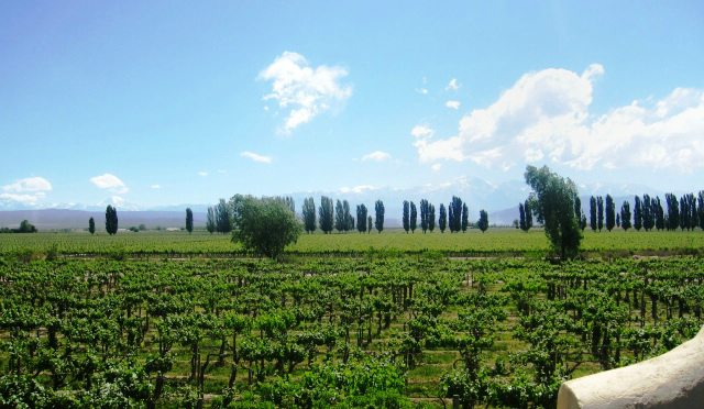 Argentina tours, Mendoza wine tour