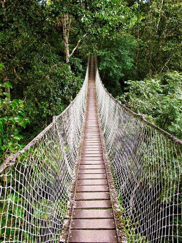A canopy walk in the Peruvian jungle near Puerto Maldonado.
