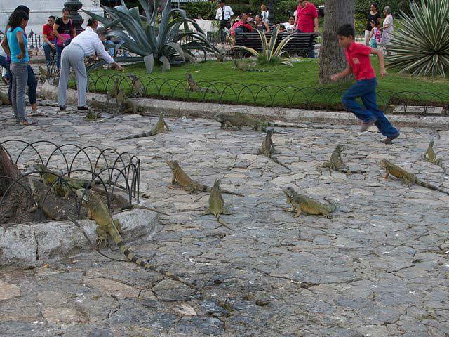 Parque Seminario, Guayaquil tours, Ecuador travel