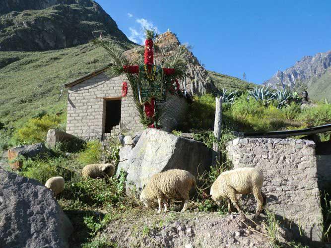 Colca Canyon, Peru trekking tours