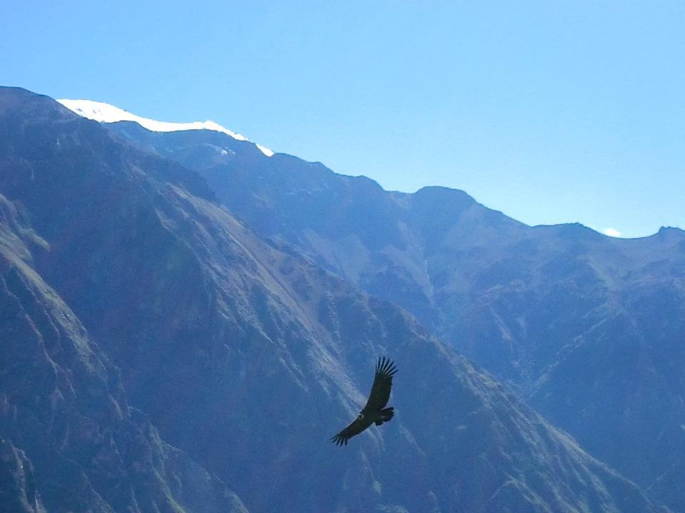 Colca Canyon tour, Peru travel, Peru For Less