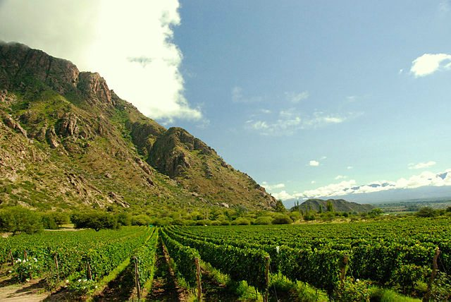 Cafayate vineyards, Argentina wine tours