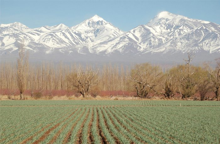 Mountains and vineyards in Mendoza, Argentina