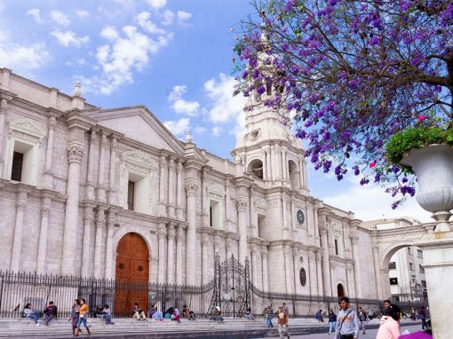 A tree with purple flowers and some visitors in walking in front of the Arequipa Cathedral.