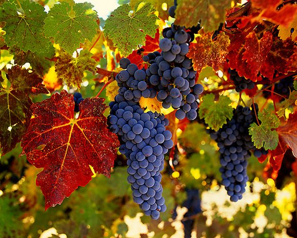 After years of mostly domestic sales, as of March 2011, Chile is one of the top 10 wine exporters in the world