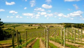 Uruguay boasts warm summers and cool winters. Humidity is high, and cooling ocean breezes create a grape-growing climate similar to that of Bordeaux.