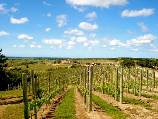 Uruguay wine tours
