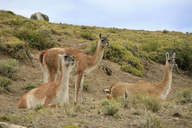 Wildlife in Torres del Paine National Park.