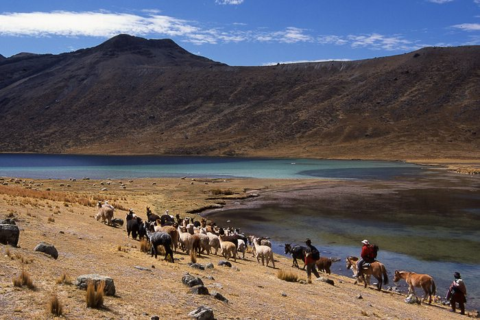 A trek in Peru is not complete without llamas. Photo by Stephane Vallin/Yunka Trek