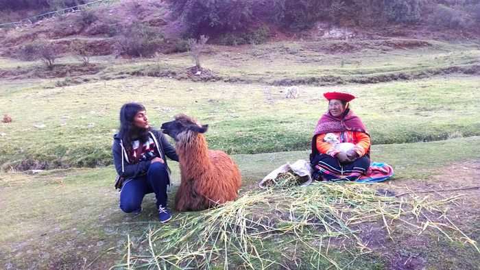 llama, Peru vacations, Peru For Less