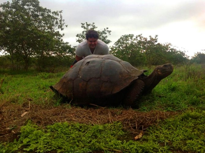 Galapagos giant turtle - Photo from Matt G.