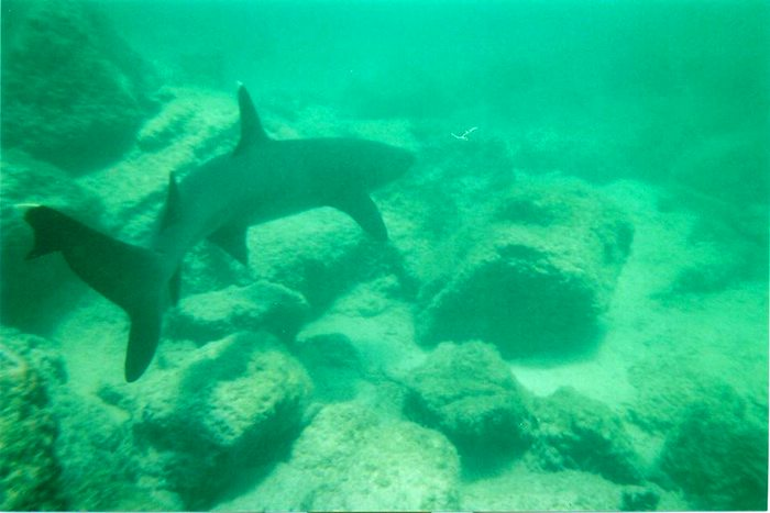 swim with sharks, Galapagos Islands, Peru For Less