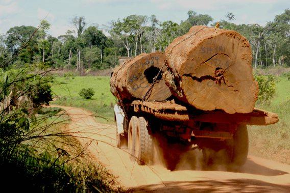 tambopata, logging, peruforless