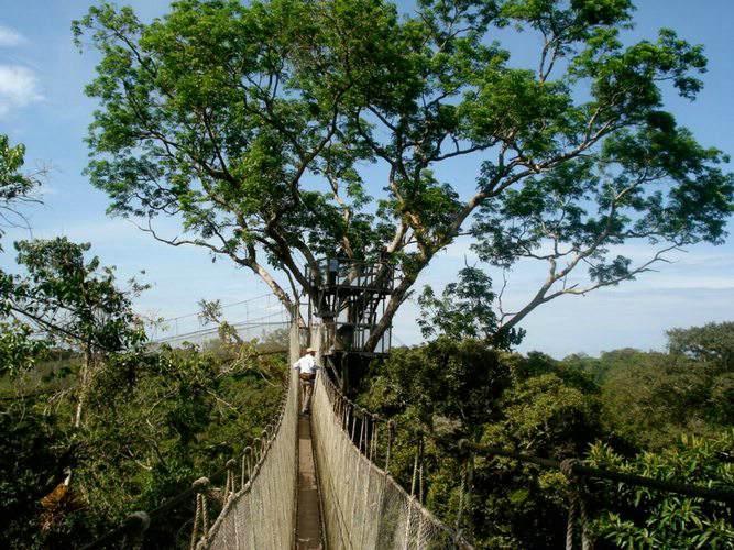 Canopy-walk2