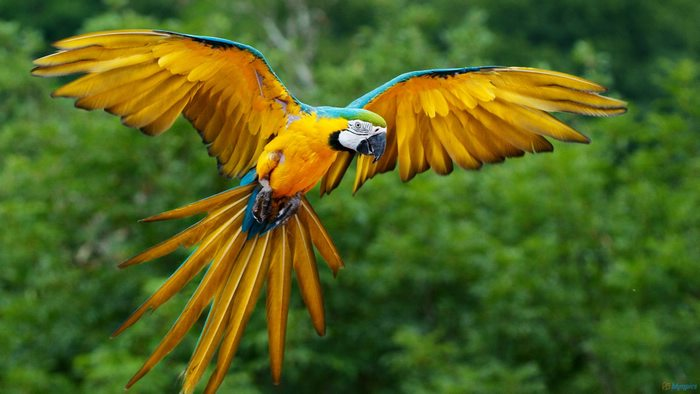 Macaw, Peru, Peru For Less