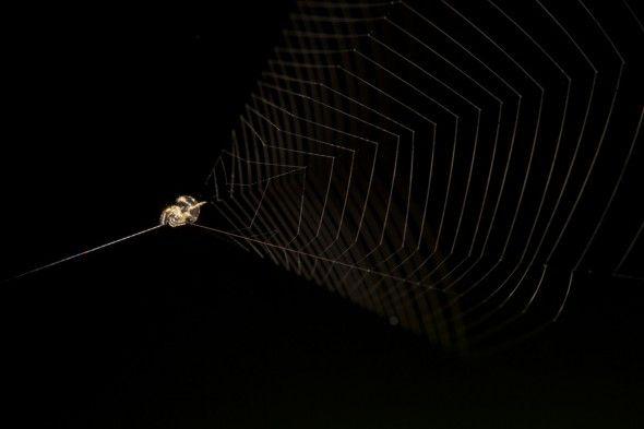 Slinshot spider web