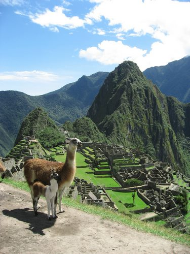 llama, Peru, Peru For Less