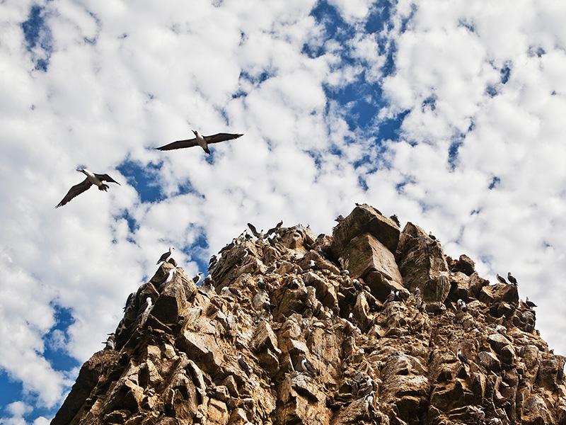 Birds congregating on a rock formation in the Ballestas Islands off the coast of Paracas.