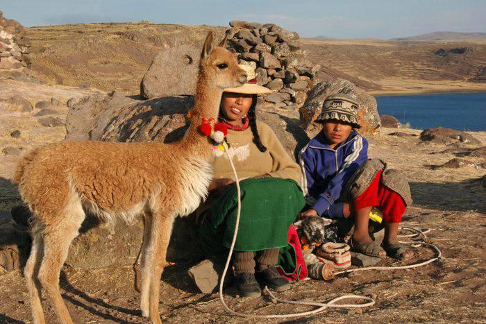 Vicuña in Sillustani, Peru, Peru For Less