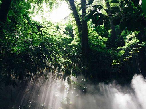 Lush green Amazon scenery with sun shining through the leaves.