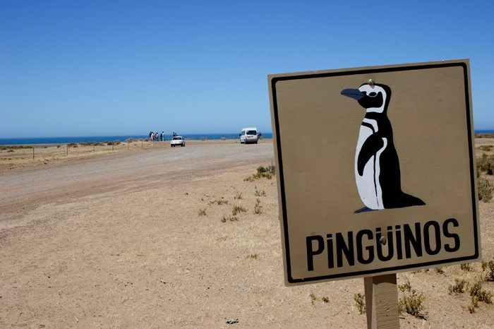 penguin road sign in South America