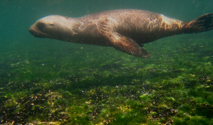 sea lion, Argentina, Latin America For Less