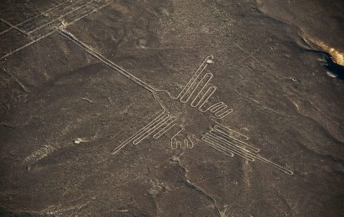 Nazca the hummingbird