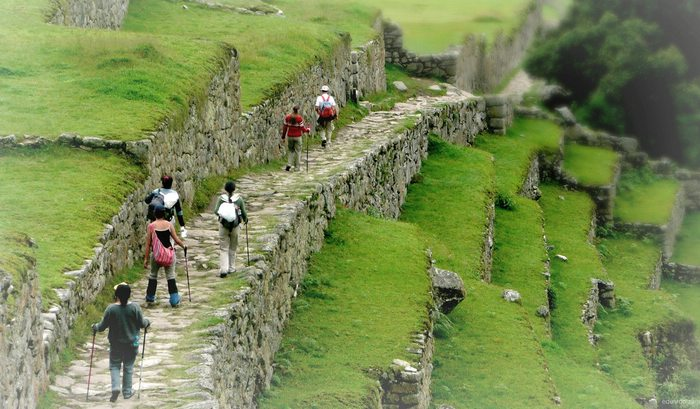 Several hikers with walking sticks follow a path along stone terraces at Machu Picchu.