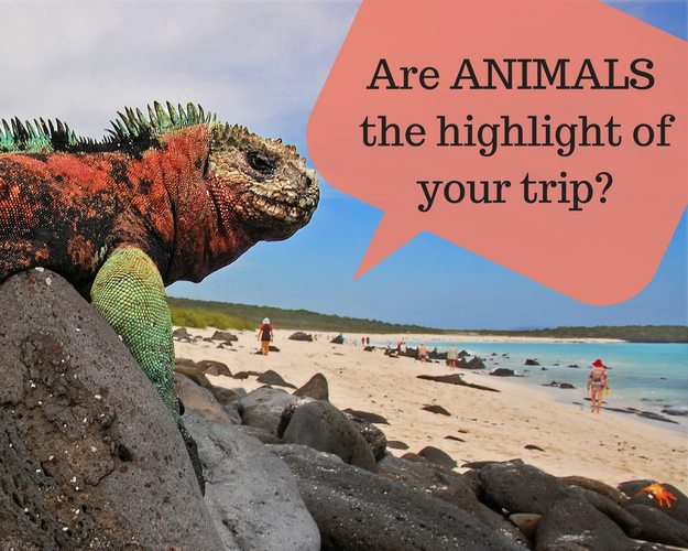 Are animals the highlight of your trip
