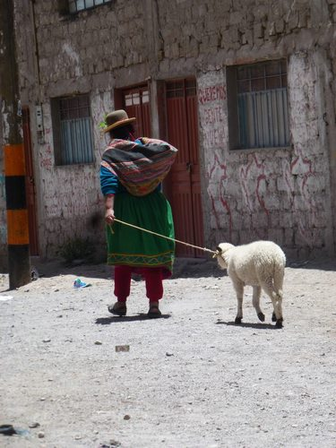 A lady with her sheep in Cotahuasi Canyon in Peru