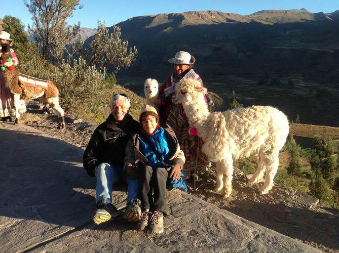 in company of llamas