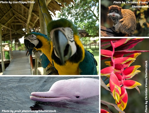 Photo collage of nature and wildlife in the Peruvian Amazon