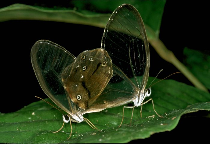 Moths in the jungle