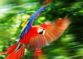 """The Macaw Project"" film debut is almost here!"