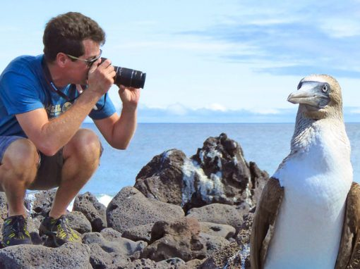 A bird posing for a travelers taking a photo in the Galapagos with the ocean in the background.