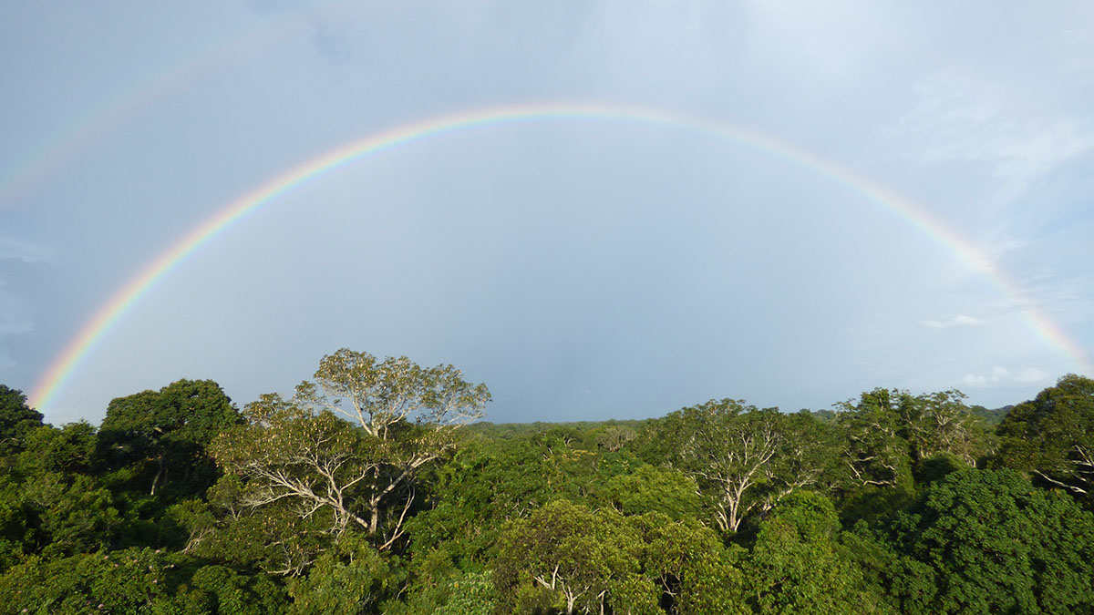 Rainbow above the lush green trees of the Amazon, the most biodiverse area on earth.