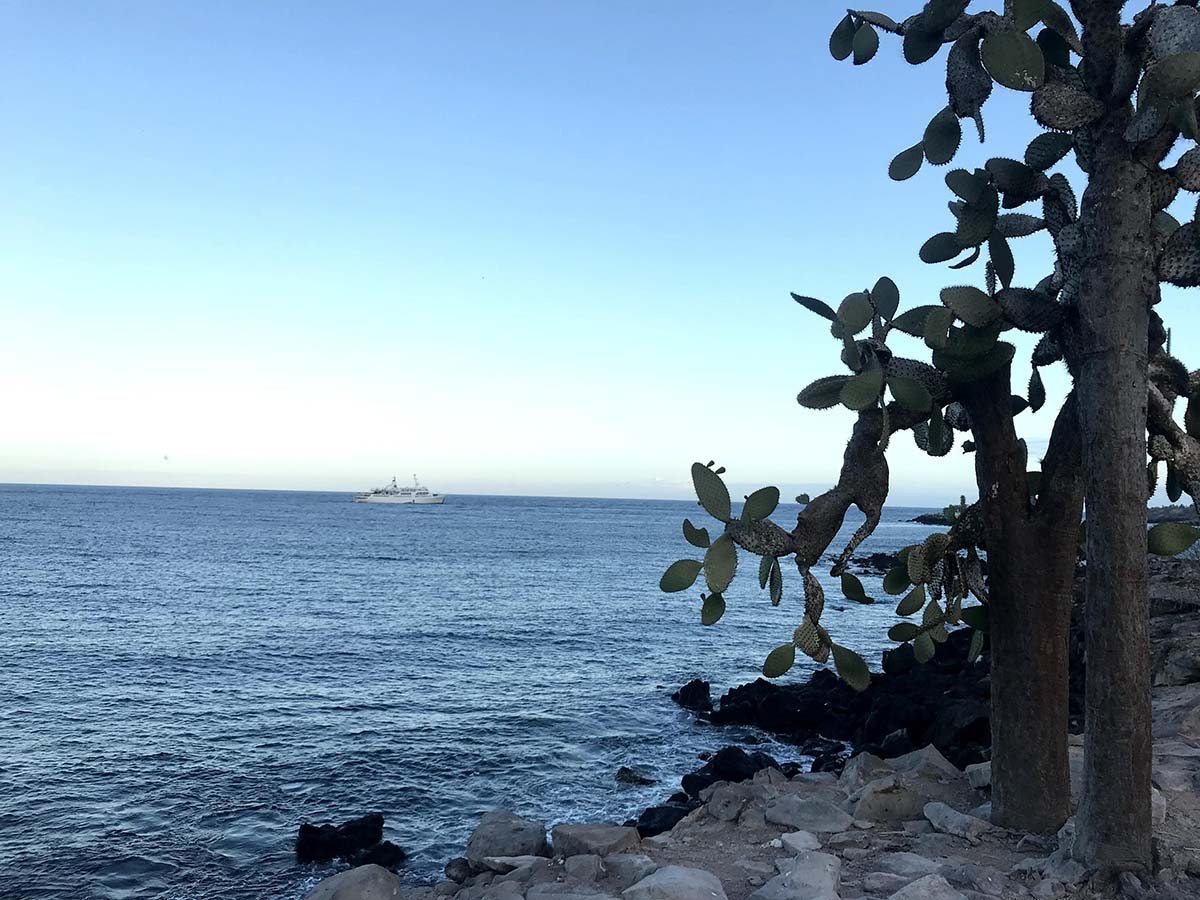 Blue ocean with white cruise ship in the distance. Rocks and cacti along the shore.